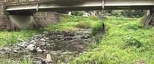ツキノワグマの出没した大谷川(岐阜県揖斐川町)