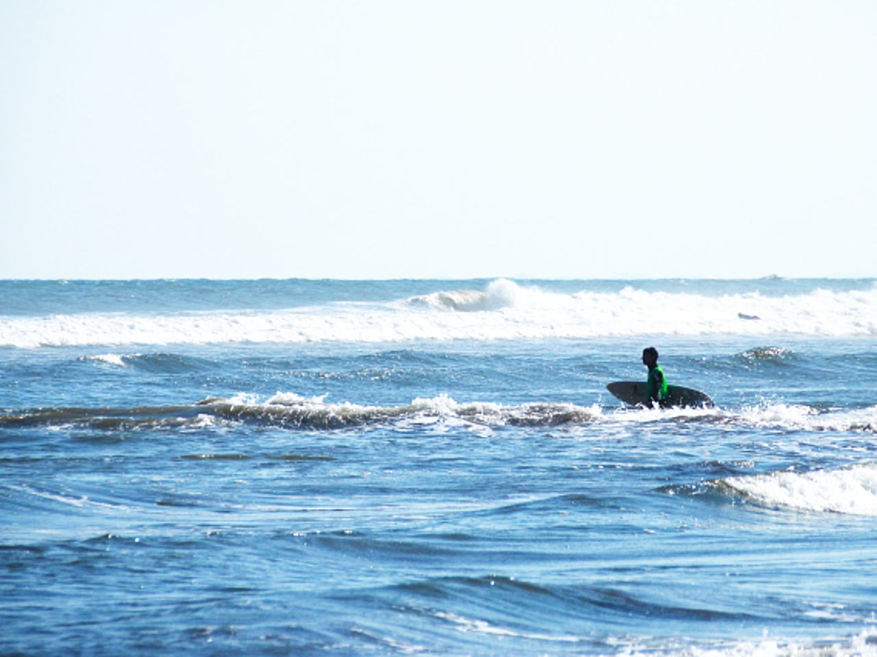 サメ事故(伊良湖)
