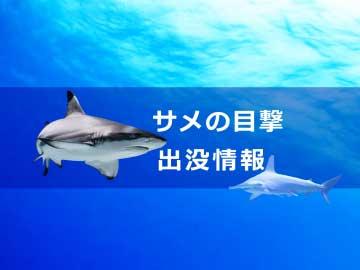 サメの目撃・出没・事故情報