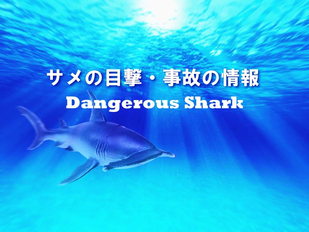 危険なサメの情報