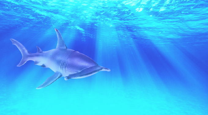 サメによる死傷事故